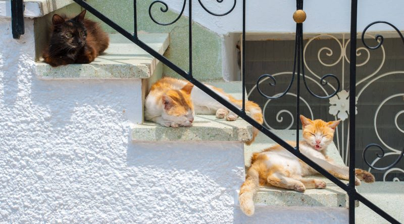 Leven als kat en hond in Griekenland
