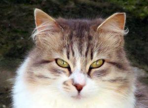 Katten in Griekenland