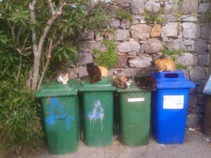 Katten bij containers