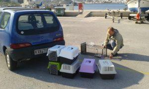 Katten steriliseren in Griekenland