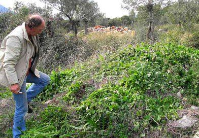 Chorta, het groene geschenk van moeder natuur