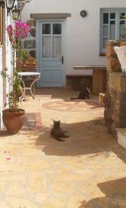 Katten op Patmos