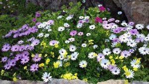 Bloemen in bloei