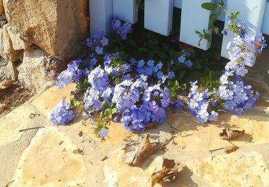 Fthinoporo: herfst, de tweede lente